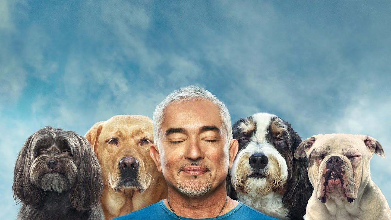 Watch Cesar Millan: Better Human Better Dog live