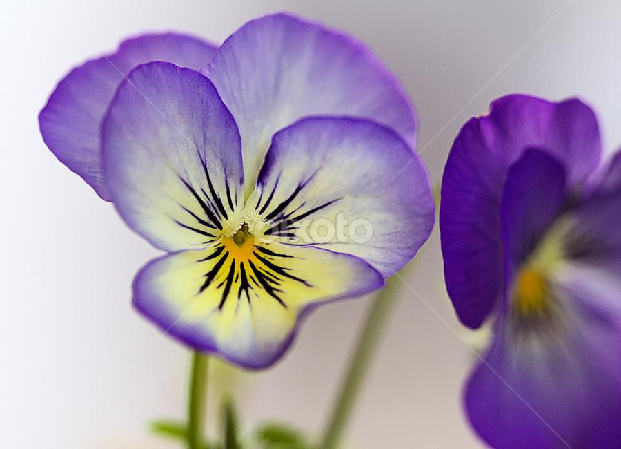 by Nikola Vlahov - Nature Up Close Flowers - 2011-2013