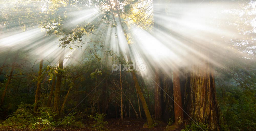 Forest light by Kathy Dee - Landscapes Forests ( streaming, dreamy, stream, dream, beautiful, ft. bragg, forest, landscape, pwcsunbeams, sun, smoke, rays, redwoods, light, Tree, Nature, Sky,  )