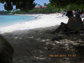 Photo: Look at the shade...