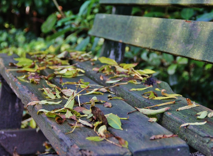Relax by Ian McGuirk - City,  Street & Park  City Parks ( pwcbenches )