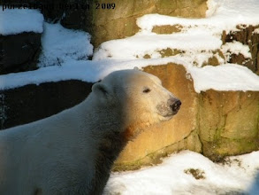 Photo: Licht-und-Schatten-Knut :-)