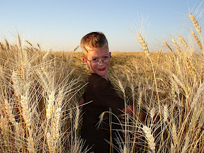 Photo: Gus in Uncle Dave's Wheat