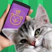 Cat Phrasebook Simulator