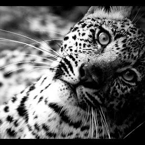 by Gareth Carter - Animals Other Mammals (  )