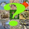 Test reptiles-peces-anfibios