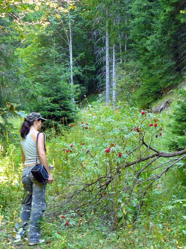 Туристическа пътека в Родопите