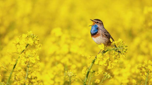 Пение птиц можно слушать даже в записи - эффект тот же