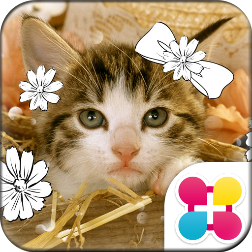 Cat Wallpaper Chaton Icon
