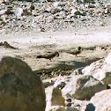 Crag Martin