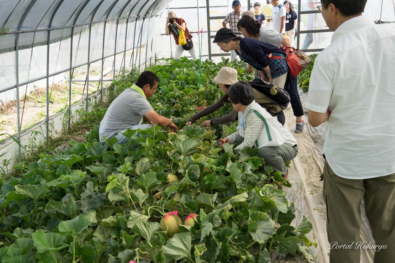 渡邊さんから収穫方法の説明を受けます