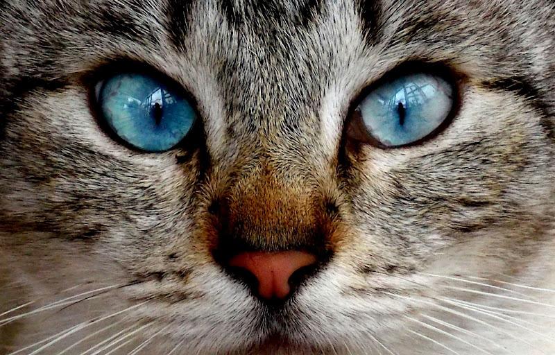 Ti ipnotizzo... di Francesca Boschetti