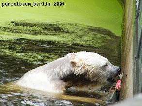 Photo: Wieder zurueck ins Wasser ;-)