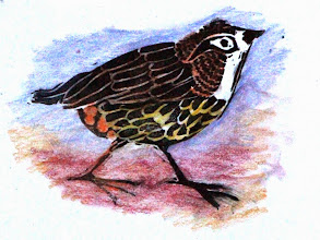 Photo: Sparrow block print--hand colored