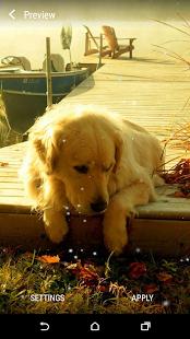 Labrador Live Wallpaper - náhled