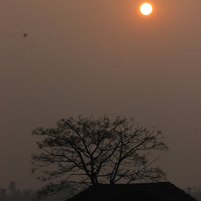 Sun Rise by Manoj Abraham - Nature Up Close Other Natural Objects ( misty morning )