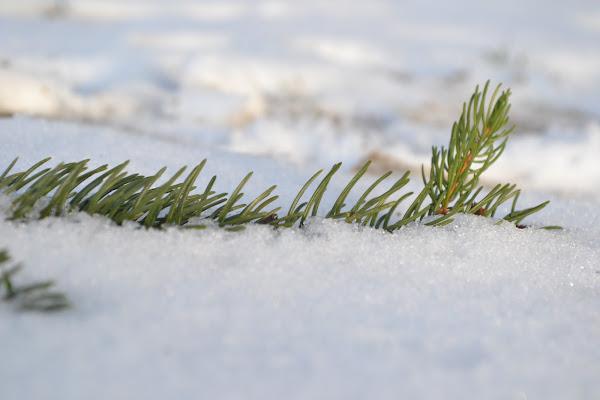 Neve di Samyna
