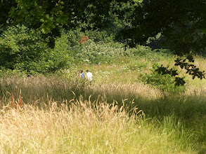 Photo: The field leading to Wealden Way.  The grasses and wildflowers look glorious in the dappled sunshine