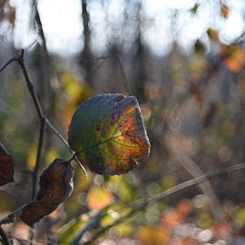Winter ends by Aldebardan CAzz - Nature Up Close Leaves & Grasses ( #nature #naturescapes #leaf #love #pic #best #trioplan )