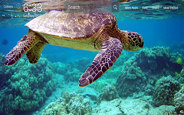 Sea Turtle Wallpapers For New Tab
