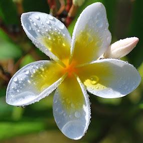 Summer by Jane Sherwin - Flowers Single Flower