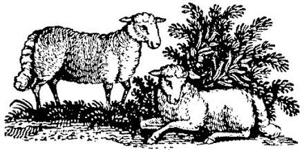Photo: Owce z XIX-tego wieku