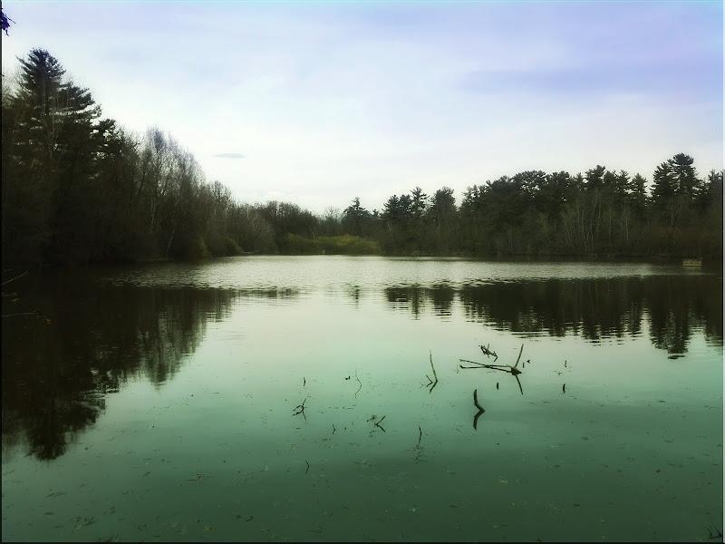 il lago del parco naturale La Mandria (Torino) di Gloria Creazzo