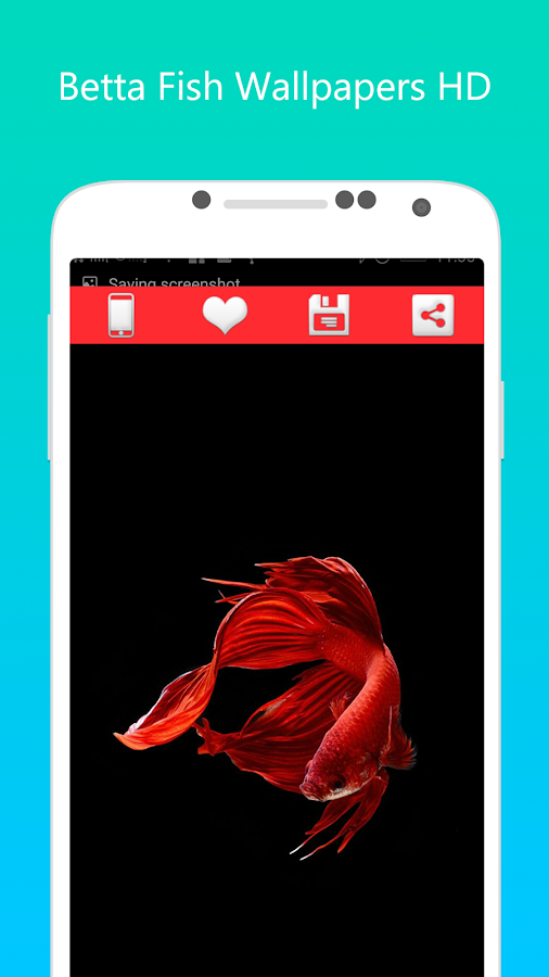 Betta fish wallpapers hd android apps on google play for Betta fish game