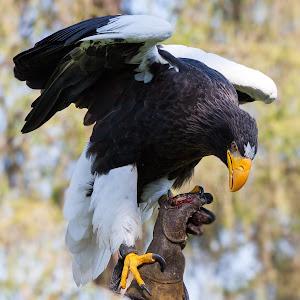 Vogel20 (1 von 1).jpg
