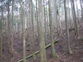 植林帯を高みへ
