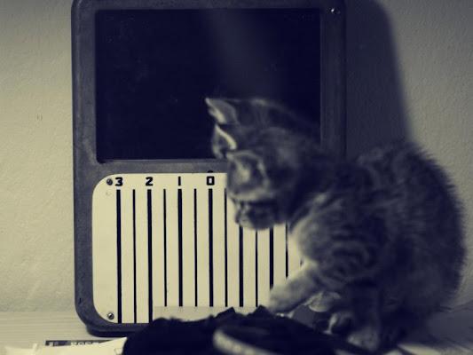 Gattino riflesso di aidoru