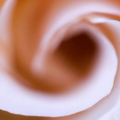 Dentro la rosa di bury