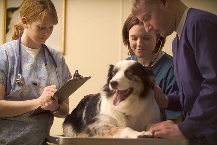 Image result for dog at vet