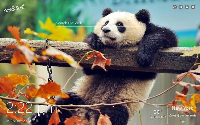 Cute Pandas HD Wallpapers New Tab Theme