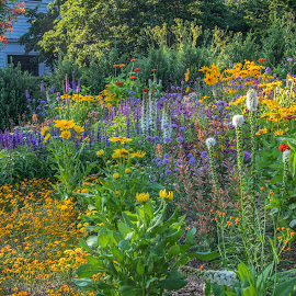 by Judy Florio - Flowers Flower Gardens
