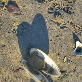 Heart on Beach  by Ann Goldman - Artistic Objects Other Objects ( heart, valentines, clam, beach )