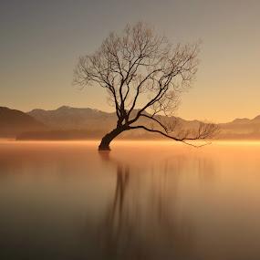 That Lone Tree by Jomy Jose - Landscapes Waterscapes ( wanaka, that lone tree, lake new zealand, new zealand, wanaka tree,  )