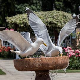 by Turgay Koca - Uncategorized All Uncategorized ( feather, flight, gliding, beak, habitat, seabird )
