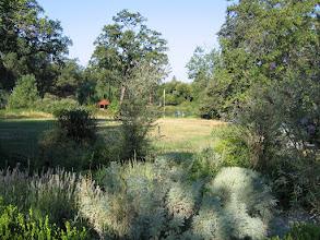 Photo: Yoga Farm, CA - green spring day