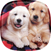Puppies Live Wallpaper 🐶 Cute Puppy Pictures