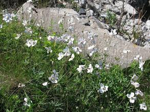 Photo: Wildflowers on Estonian west coast