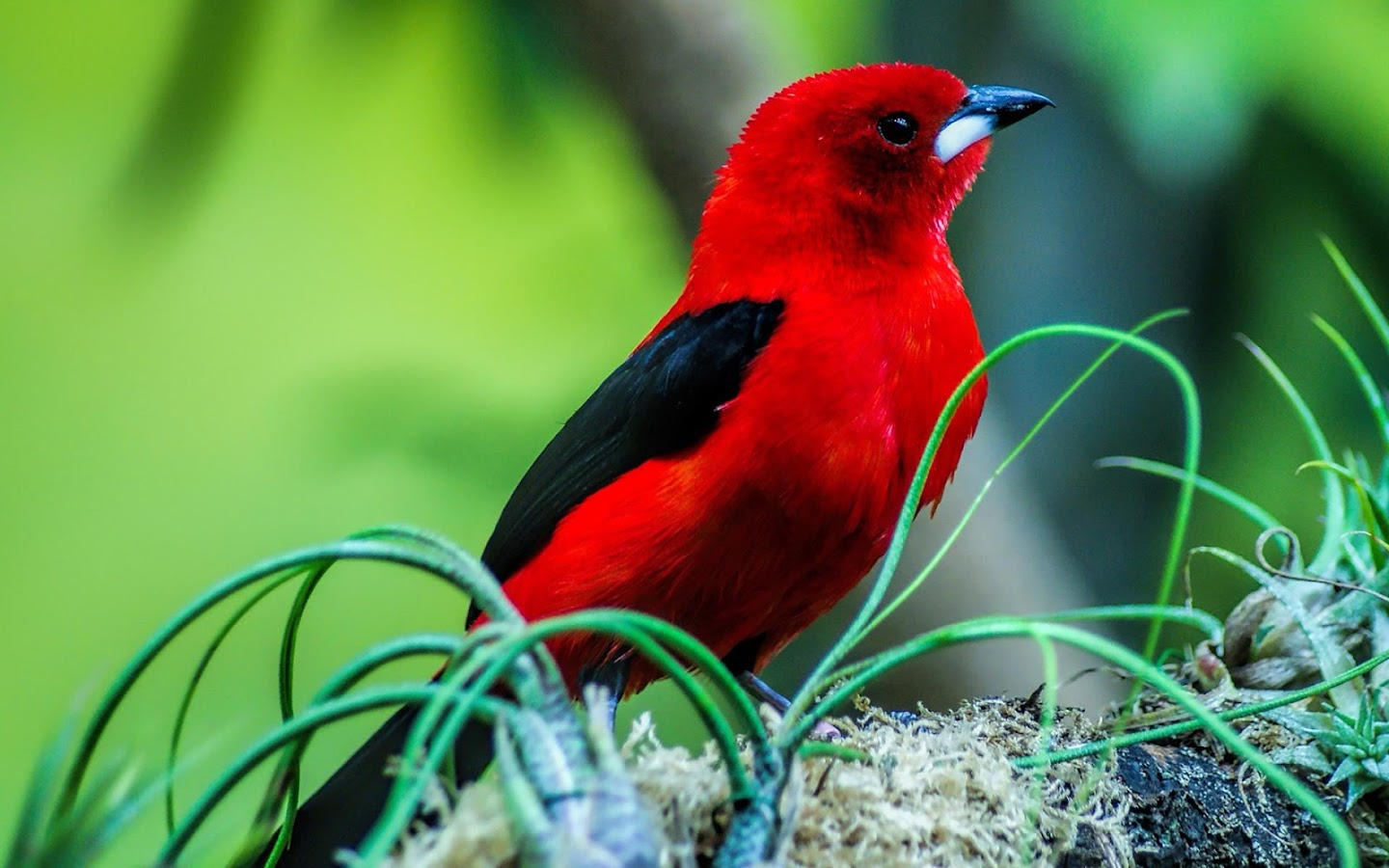 Birds Wallpapers Hd Android Apps On Google Play