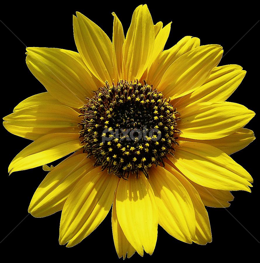 by Kausik Sarkar - Nature Up Close Flowers - 2011-2013