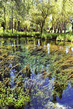Photo: Fonti del Clitunno / Perugia / ITALY The incredible mix of the reflection of the trees and the aquatic plants!