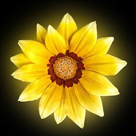 by Abdul Rehman - Flowers Single Flower (  )