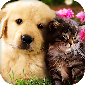 Cats and Dogs Live Wallpaper (Backgrounds)