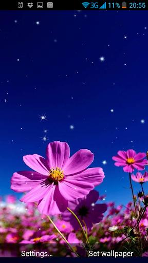 단꽃이라이브 배경 화면