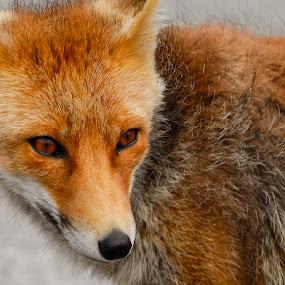 by Fernando Ale - Animals Other Mammals (  )