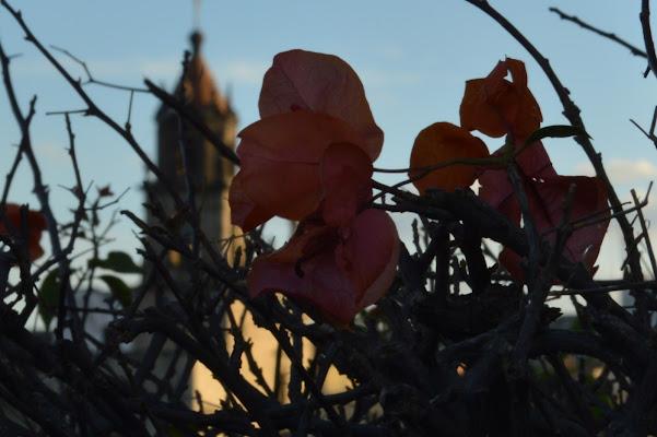 La bugambilia di fotografía LOHR