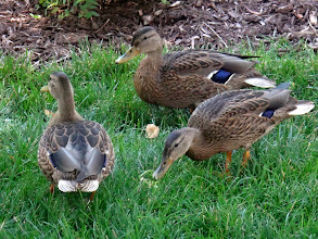 Photo: They've been at the home since they were hatched